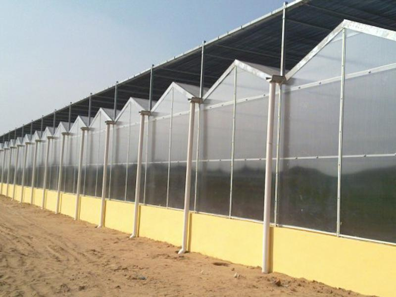 PC-sheet Multi-Span Greenhouse