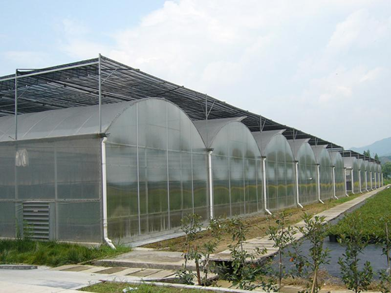 Plastic-film Multi-Span Greenhouse