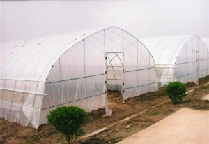 Easily Installed Arched & Cheapest Tunnel GreenhouseTunnel Greenhouse