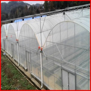 Low Cost Agriculture Multi Span Film Greenhouse for Mushroom