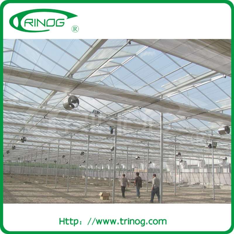 Glass Greenhouse for lettuce Nft System