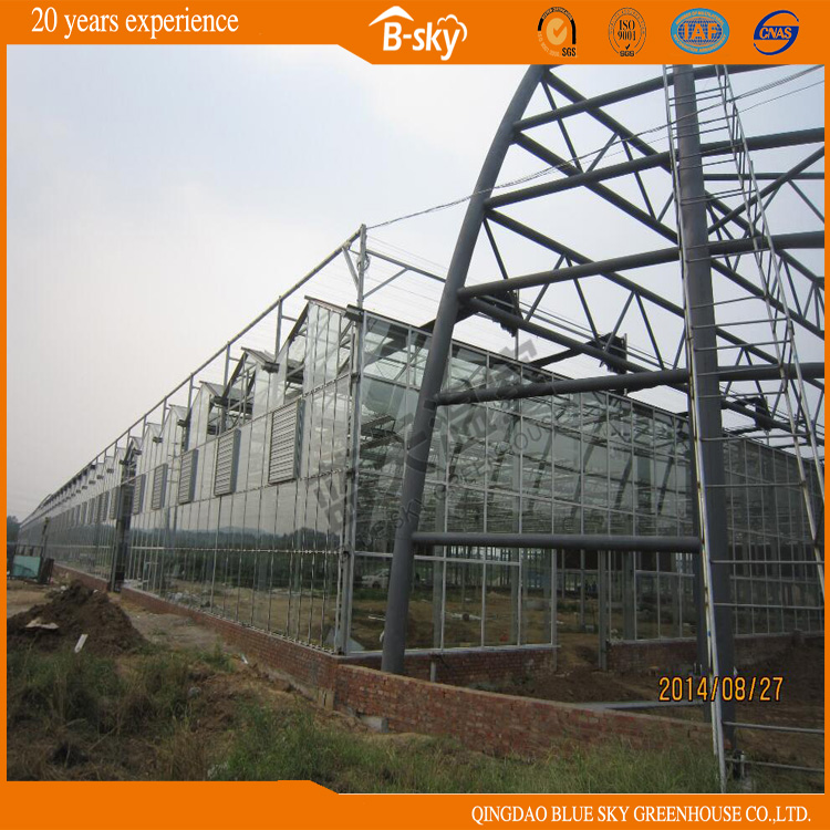 Venlo Structure Long Life-Span Greenhouse